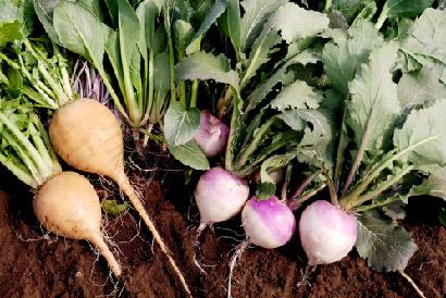 自家たい肥で作った野菜